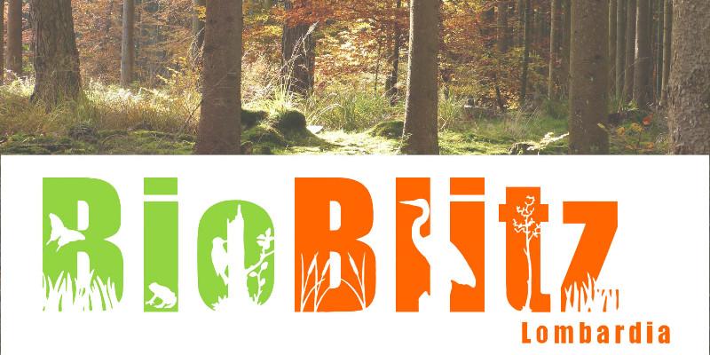 banner-bioblitz19