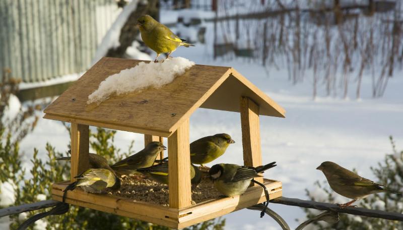 mangiatoria-per-uccelli-fai-da-te